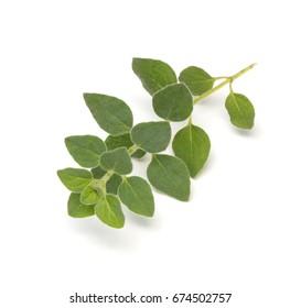 Freshly cut oregano (Origanum vulgare) leaves isolated on a white background