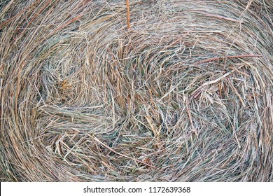 Freshly cut summer hay close-up