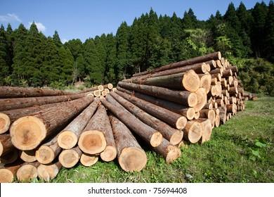 Freshly cut tree logs piled up