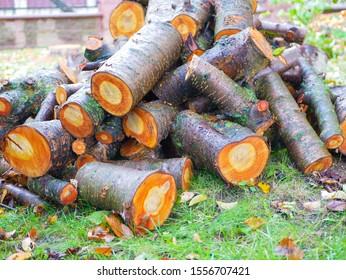 Freshly cut tree logs. Cut pine logs. Close-up. Firewood for the winter. Bouquet of many fresh logs. Wet logs. Orange color cut