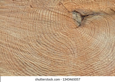 Freshly cut tree trunk, closeup shoot
