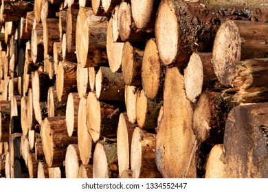 Freshly cut tree trunks, strained and stacked