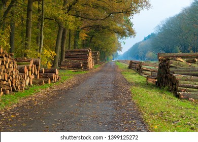freshly cut wood logs piled up along a road ready for transportation