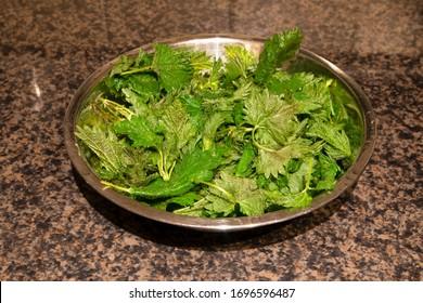 Freshly foraged organic healthy green nettle leaves