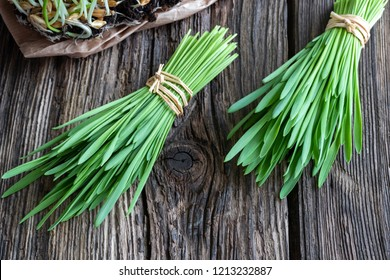 Freshly harvested barley grass on a wooden background