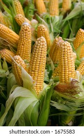 Freshly harvested corn, close up ready for sale