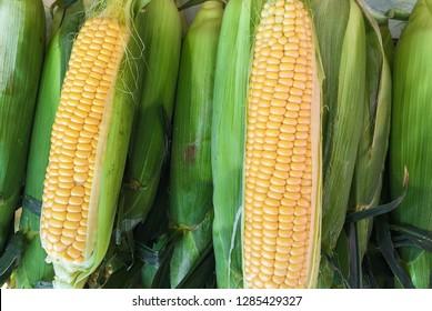 Freshly harvested corn on wooden background, corn oil