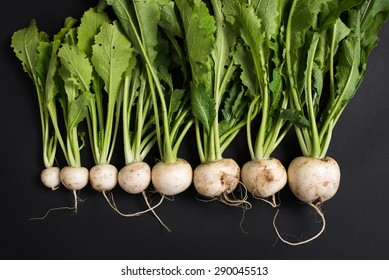 freshly harvested, dirty, organic farm grown white turnips in different sizes. isolated on black background, close up, horizontal