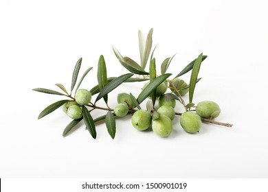 Freshly harvested green olives from organic farming
