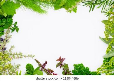 Freshly harvested herbs, herbs frame over white background