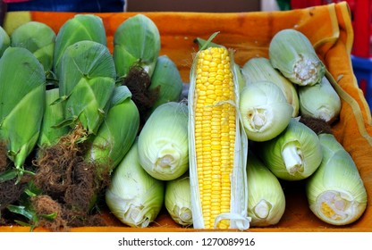 Freshly harvested organic corn on the cob for sale at the market