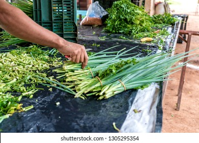 freshly harvested organic parsley and chives ready to sell