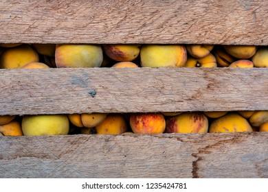 freshly harvested peach