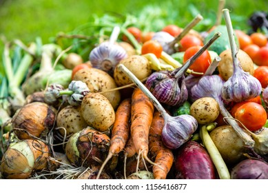 Freshly harvested vegetable, background, healthy farm fresh vegetables on farmer market
