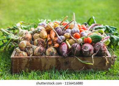 Freshly harvested vegetable in the box, fresh farm vegetables, bio organic food concept
