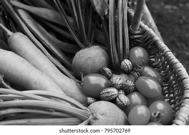 Freshly harvested vegetables from the allotment in a woven basket - carrots, beetroot, ripe tomatoes and cucamelons - monochrome processing