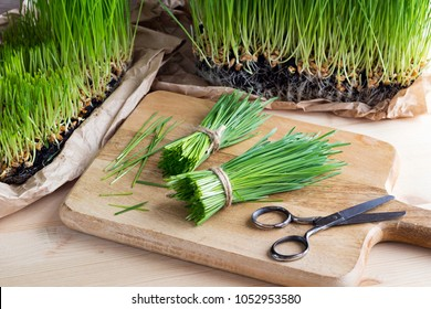 Freshly harvested wheatgrass with scissors on a wooden cutting board