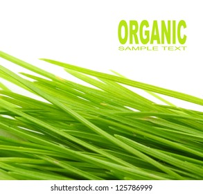 Freshly harvested young green barley. Organic food concept. Picture with space for your text.