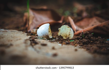 Freshly hatched eggs of a reptile (lizard) lying in the dirt with fallen brown leaves of an apple tree. Indicative of new birth, photo edited to look like a painting.