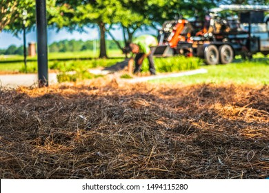 A freshly laid bed of pinestraw with a worker and work truck with a trailer in the background