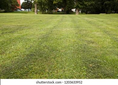 freshly mowed lawn in the city park