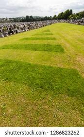 Freshly mown golf course lookalike grassland, turf in Irish cemetery