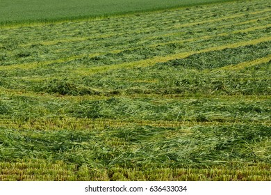 Freshly mown hay