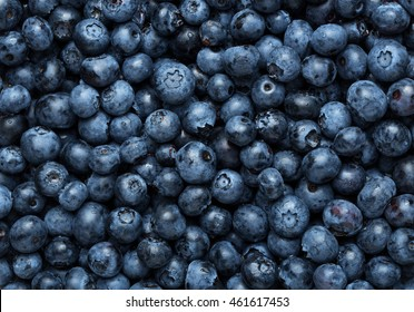Freshly picked blueberries background, texture with copy space