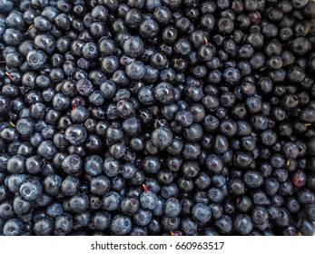 Freshly picked blueberries from Finland.
