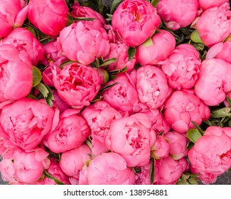 Freshly picked bouquet of peony flowers on display at the farmers market