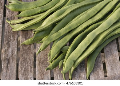 Freshly picked up broad beans