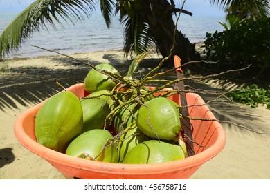 Freshly picked coconuts in a wheelbarrow