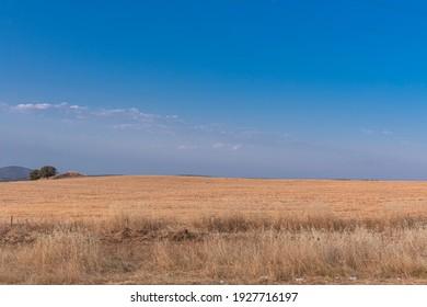 Campo de cereal seco recién recolectado en el fondo, en el sur de Andalucía España.
