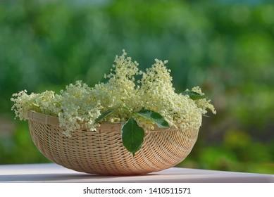 Freshly Picked Elderflower Cordial in basket
