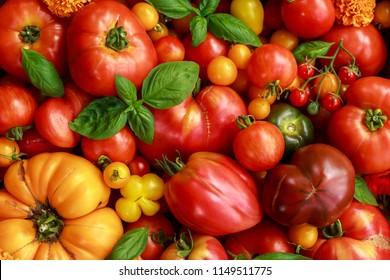 Freshly picked heirloom tomato harvest: pear shaped, beef heart, tigerella, brandywine, cherry, black.