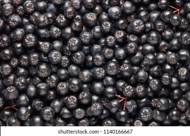 Freshly picked homegrown aronia berries. Aronia, commonly known as the chokeberry. Full frame shot of chokeberries.