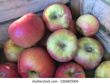 Freshly picked Honeycrisp apples in a wood crate ready to eat