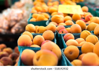 freshly picked organic apricots in boxes at the farmers market in Vancouver, BC