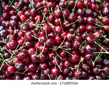 freshly picked organic cherries with stalks and green leaves