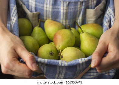 Freshly Picked Pears