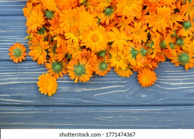 Freshly picked pot marigold flowers (Calendula officinalis) on gray wooden background, harvesting of medicinal plants in summer
