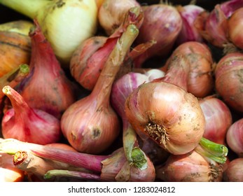 Freshly picked red onions. Top view.
