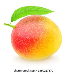 Freshly picked single mango isolated on a white. With clipping path.