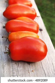freshly picked tomatoes ripening on a weathered picnic table