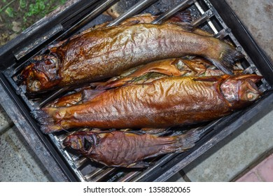Freshly prepared fish trout in the smokehouse