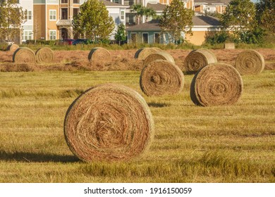 Freshly rolled bales of hay on green grassland near a suburban neighborhood on a sunny afternoon in west central Florida, USA (foreground focus)