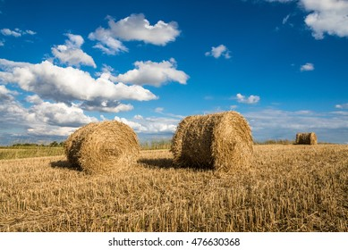 Freshly rolled hay bales in a field after harvest in Poland.