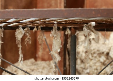 freshly shorn wool hanging from the turntable after being sorted and graded in a traditional old timber shearing shed, rural Victoria, Australia