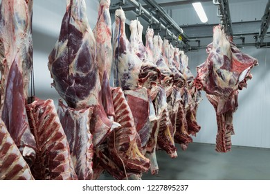 Freshly slaughtered halves of cattle hanging on the hooks in a refrigerator room of a meat plant for further food processing.
