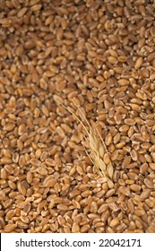 Freshly threshed wheat grains